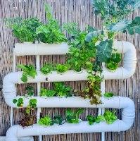 מערכת הידרופונית NFT לגידול 24 צמחים