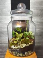 טרריום צמחים סגור