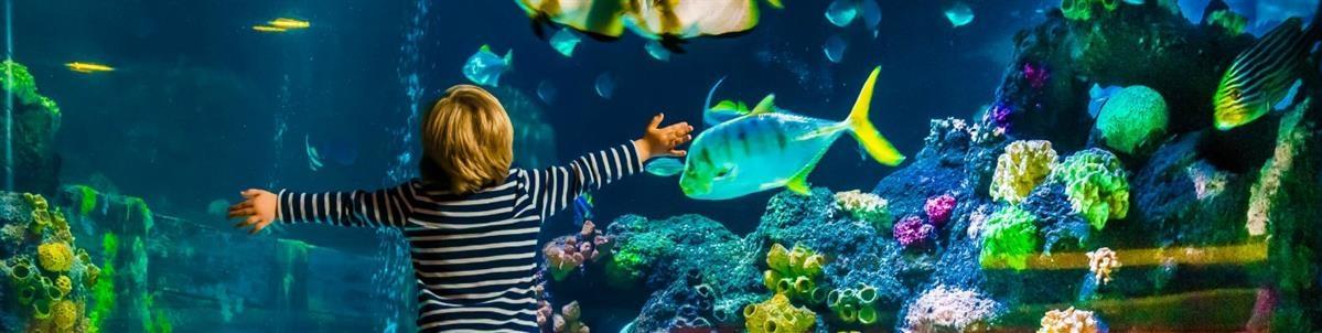 ציוד לדגים - המחסן - מוצרים לבעלי חיים
