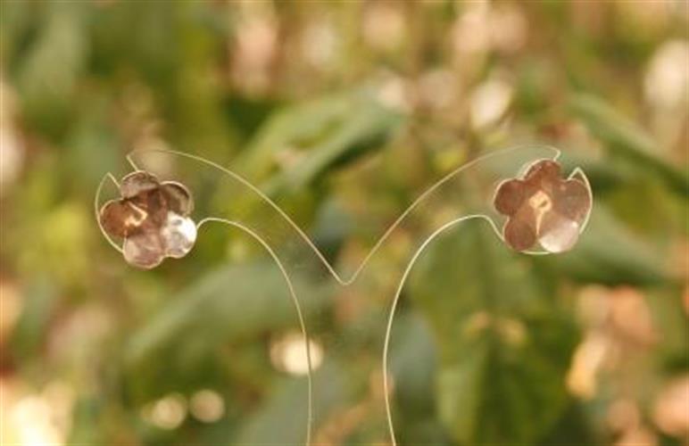 עגילי פרח- דגם 2