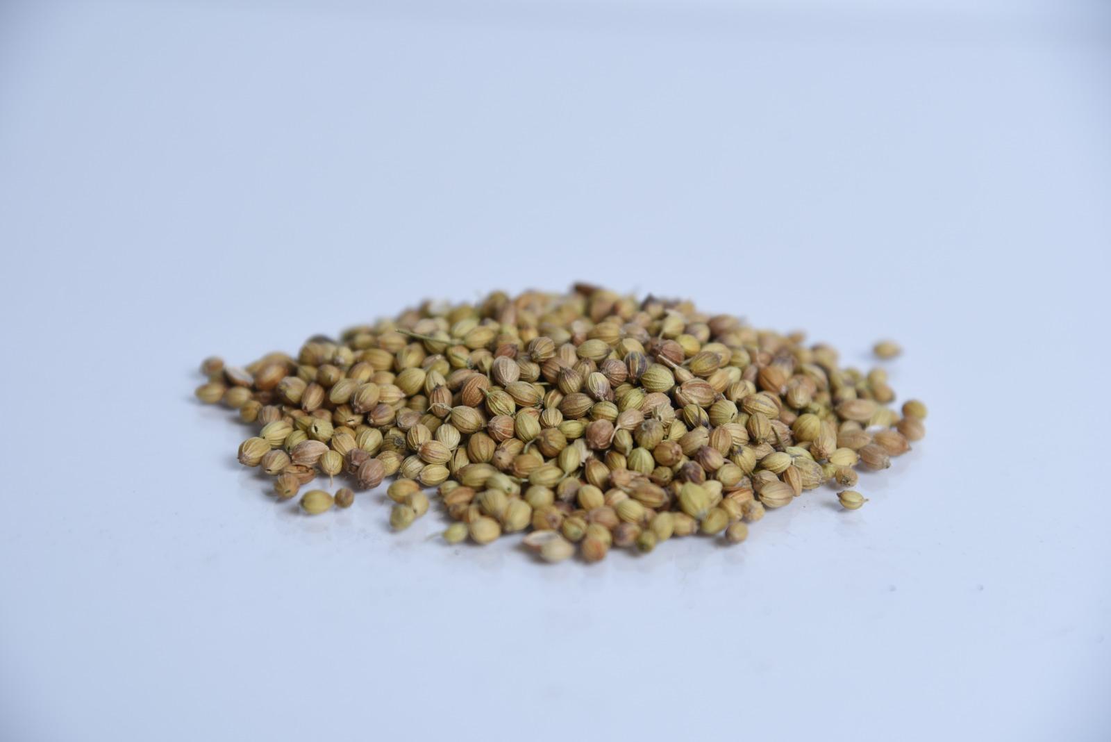 זרעי כוסברה