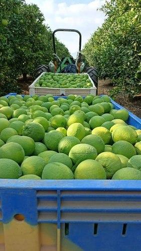 תפוז ניו הול - 6 יח'