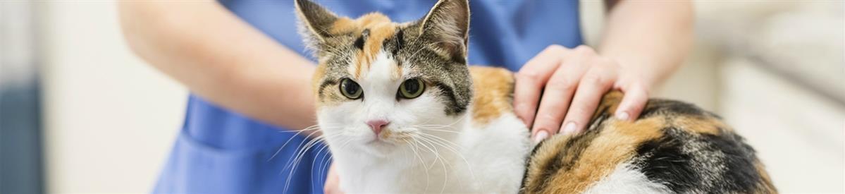 מזונות רפואיים לחתולים - המחסן - מוצרים לבעלי חיים