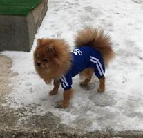חליפת אדידוג לכלבים