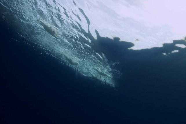 משחה בת ים