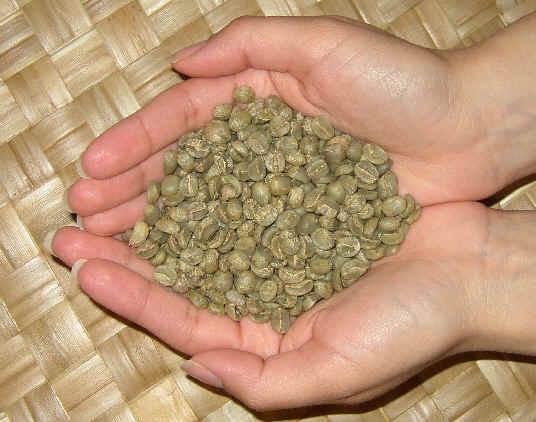 קפה ירוק גאוה קלוסי - Java Kalossi
