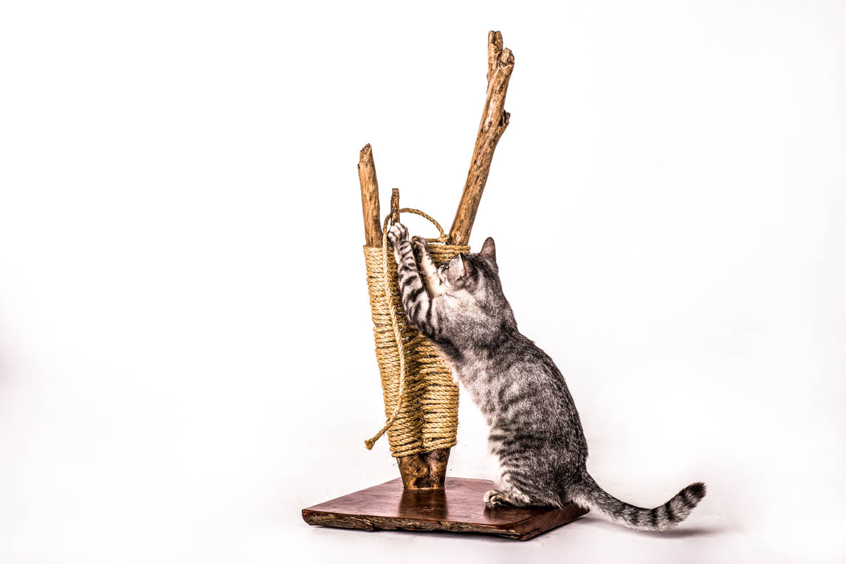 עמוד גירוד לחתול - אקליפטוס