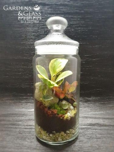 טרריום צמחים גודל 4