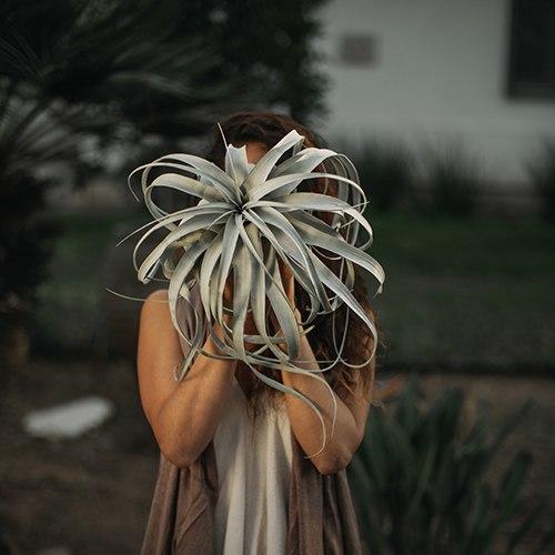 זירוגרפיקה (צמח נדיר)
