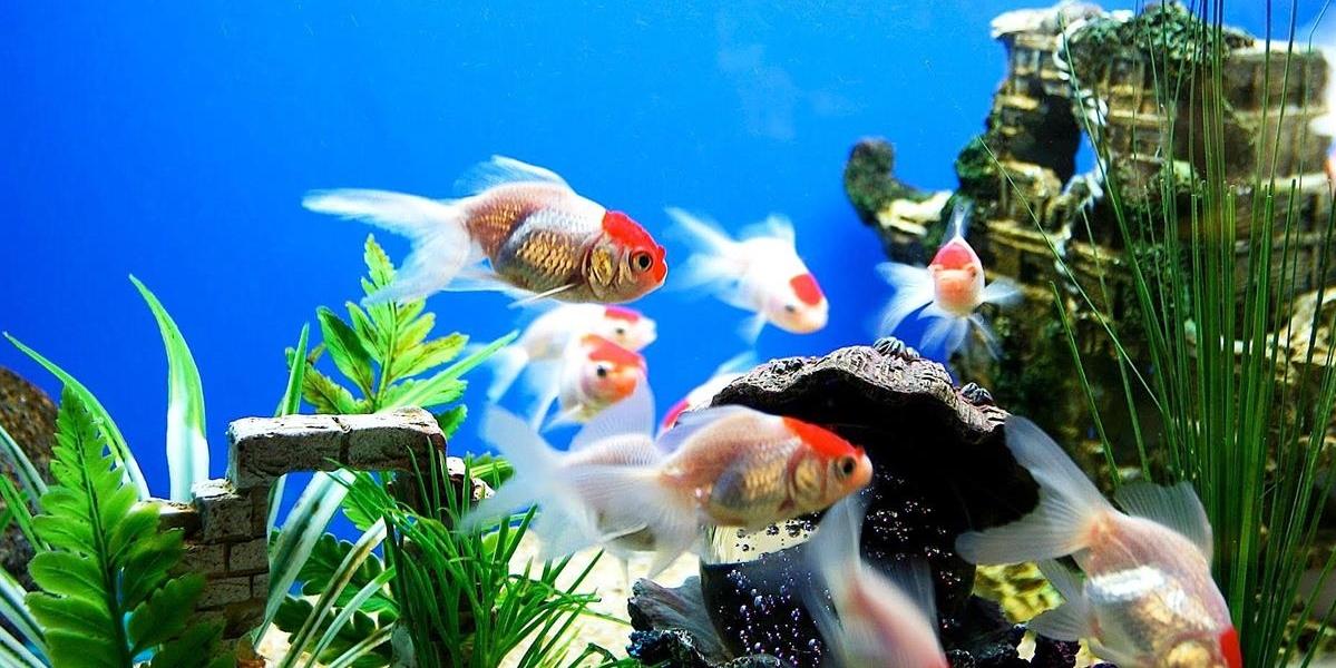 ציוד לדגים - שפע לחי - מוצרי איכות ופינוק לבעלי חיים