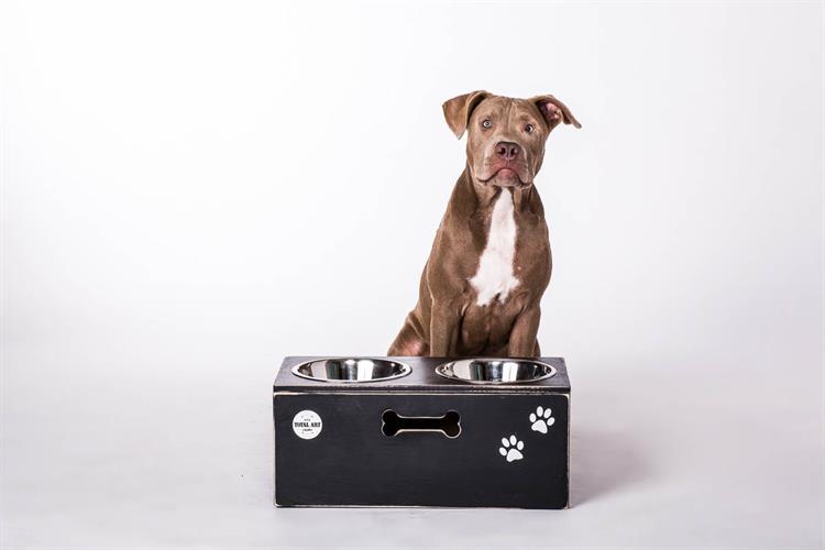 כלי אוכל ושתיה לכלב - צ'ייסר L