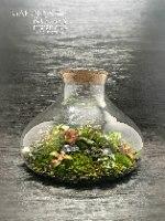 טרריום צבעוני בטבע