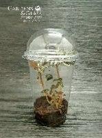 פילאה ספרוסיאנה כוס 2