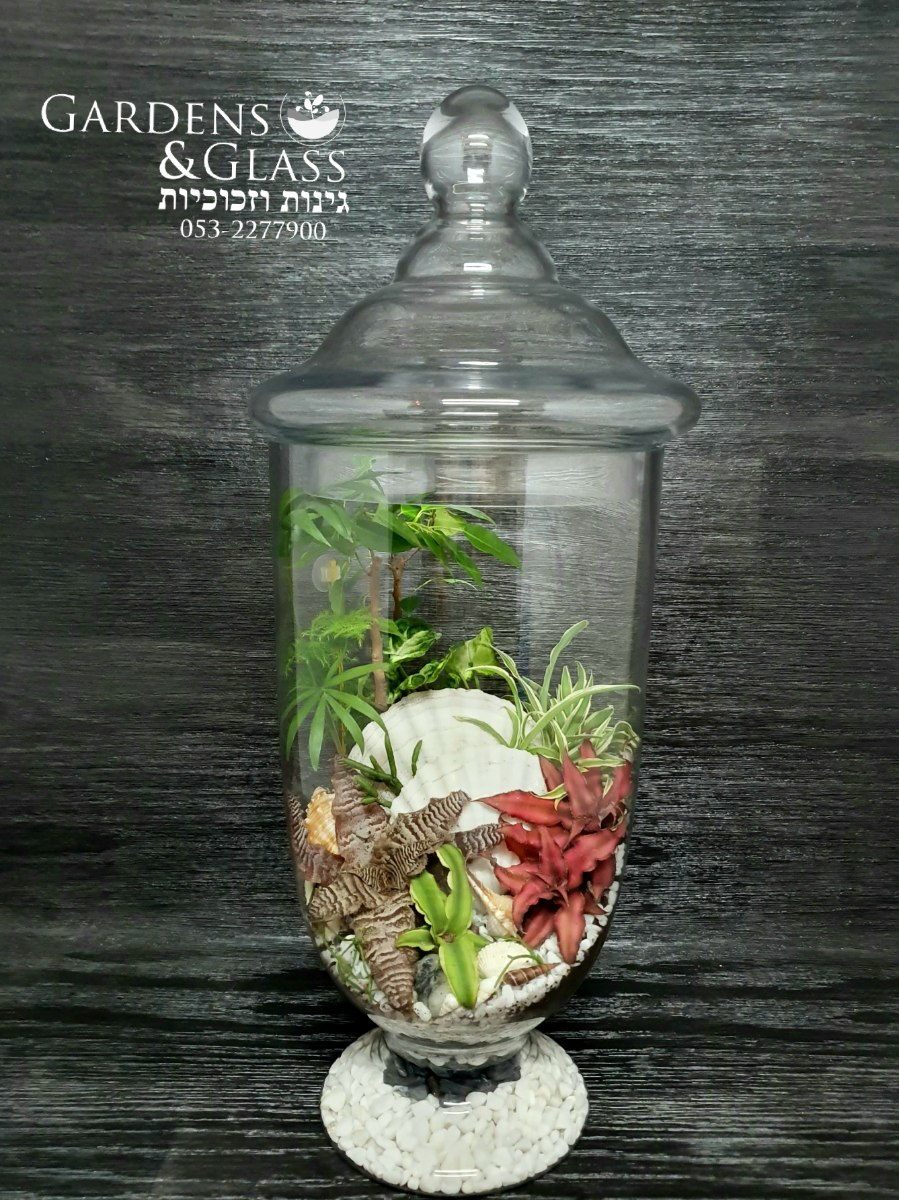 טרריום צמחים