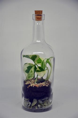 טרריום בקבוק