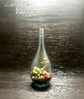 טרריום בקבוק 2 ליטר