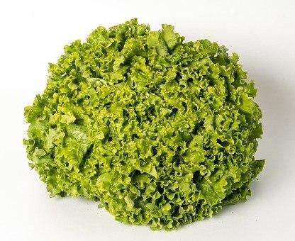 חסה מסולסלת ירוקה אורגנית