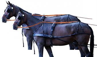 סט רתמות מעור לזוג סוסים
