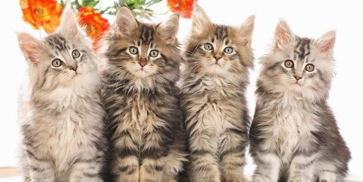 שפע לחי - מוצרי איכות ופינוק לבעלי חיים
