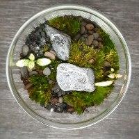 טרריום צמחים גודל 2