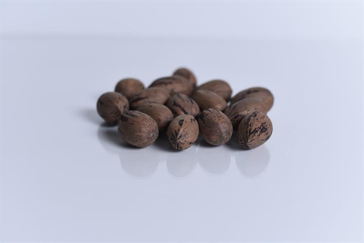 אגוזי פקאן בקליפה