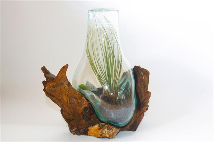 """טרריום ואזה גובה 25 ס""""מ על גזע עץ עם צמח אוויר"""