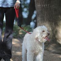 רצועה לכלב עם כיס SPIleash