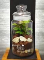 טרריום צמחים קטן