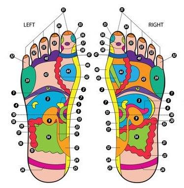 קורס אבחון רפלקסולוגי בכפות הרגליים