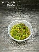 מוס דשא כופסית 1