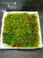 עוגת טחבים דשא מיקס בזנים