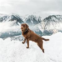קולר לכלב גדול Hudson's Bay Company Navy Reflective