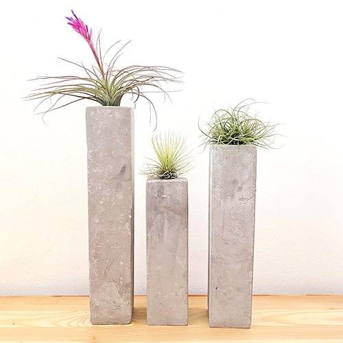 פמוטי בטון וצמחי אויר