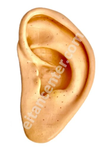 קורס אבחון אוריקולרי - באפרכסת האוזן