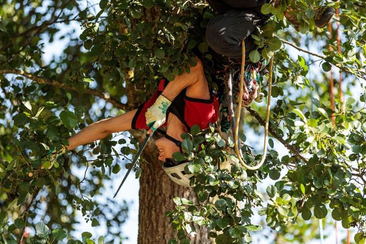 סדנת טיפוס  יחודית למטפסי עצים-לתלמידים