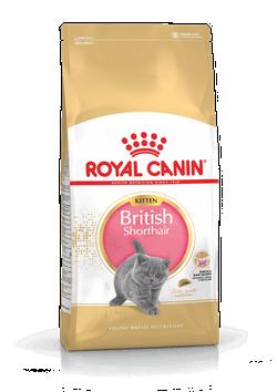 """רויאל קנין גור חתולים בריטי שיער קצר 4 ק""""ג"""