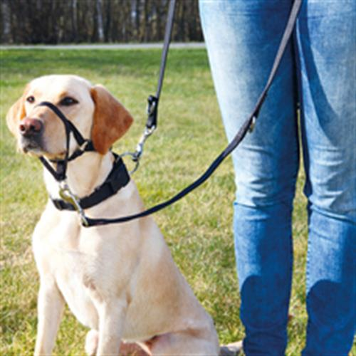 Top Trainer Training Harness trixie