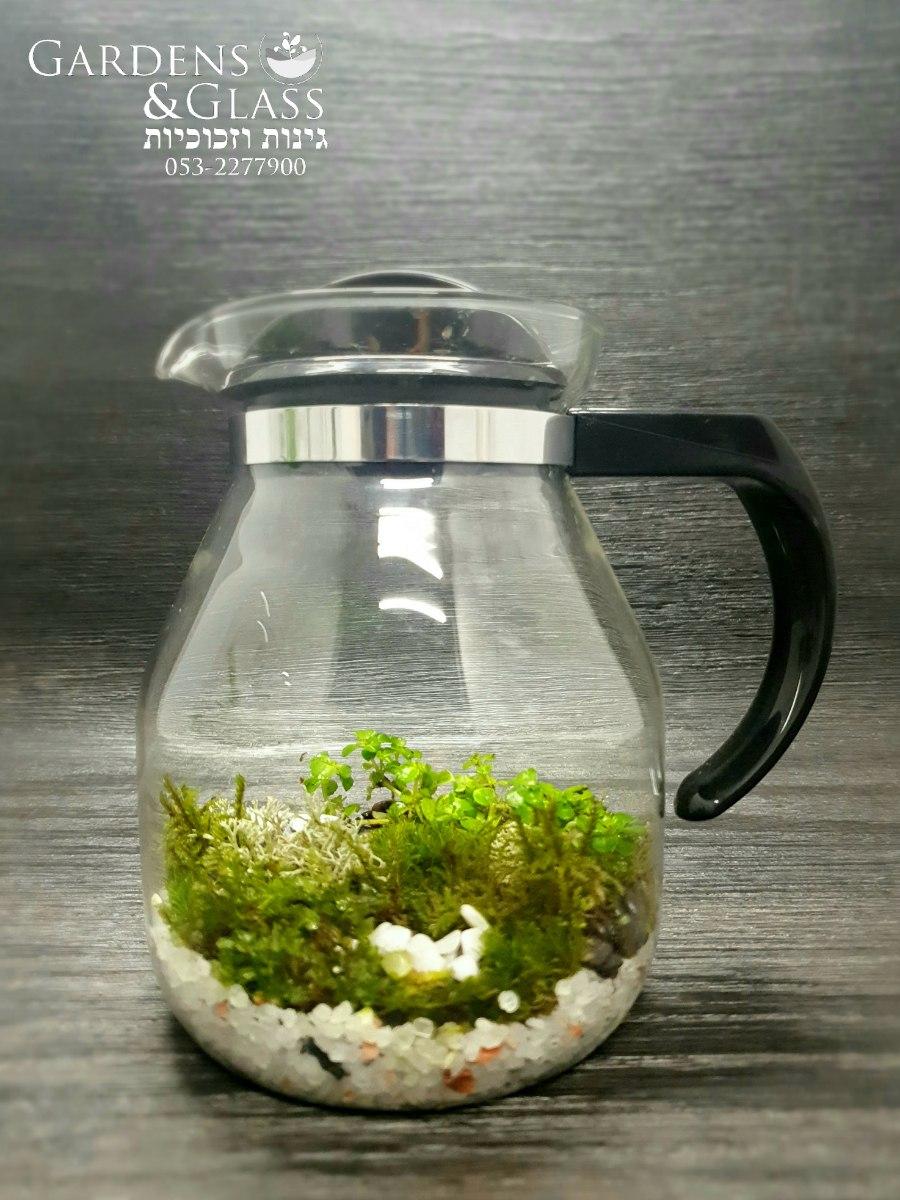 קנקן צמחים