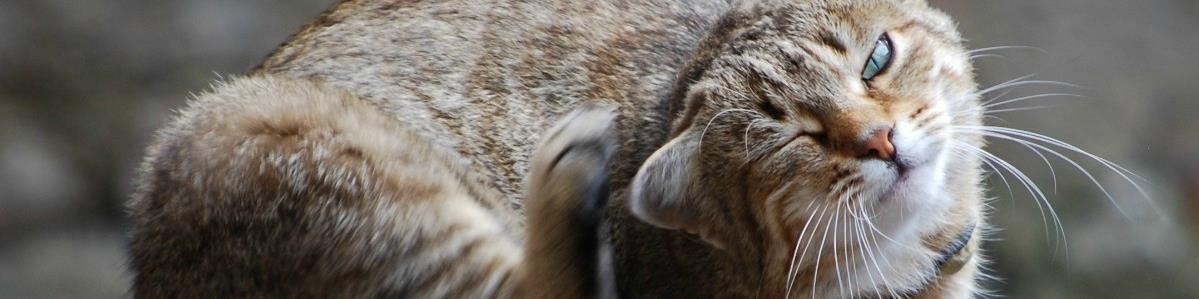 מוצרי הדברה לחתולים - המחסן - מוצרים לבעלי חיים