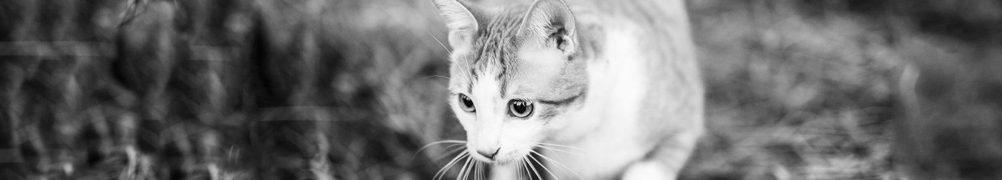 מזון יבש לחתולים - יוגי-בר