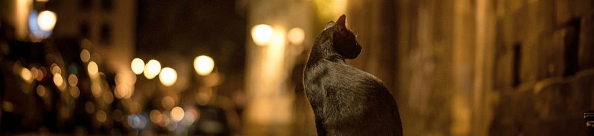 מזון אקונומי ולחתולי חצר - המחסן - מוצרים לבעלי חיים