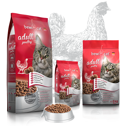 """בוויקט עוף 5 ק""""ג מזון פרימיום לחתולים"""