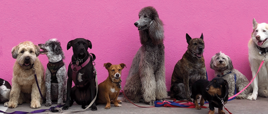 כלבים - המחסן של חיים