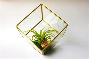 טרריום זכוכית - מרובע