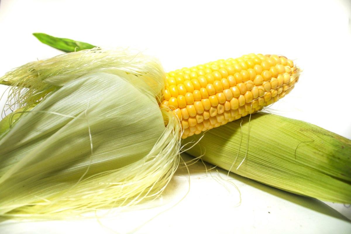 תירס צהוב ארוז