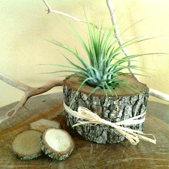 בול עץ וצמח אויר
