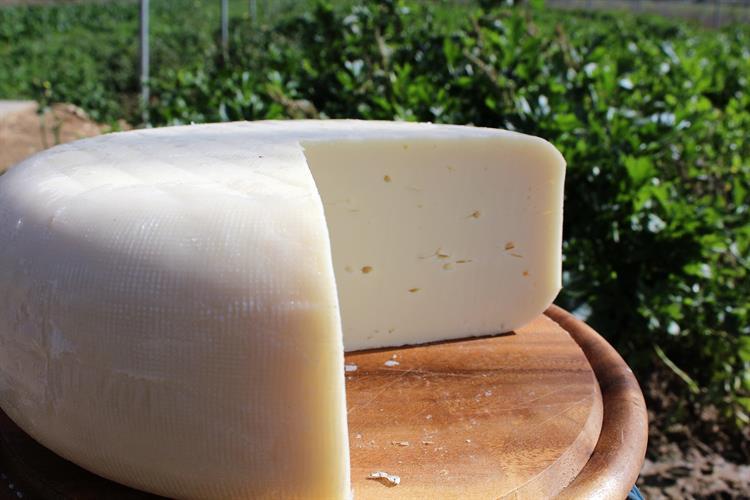 גבינה בסגנון תום