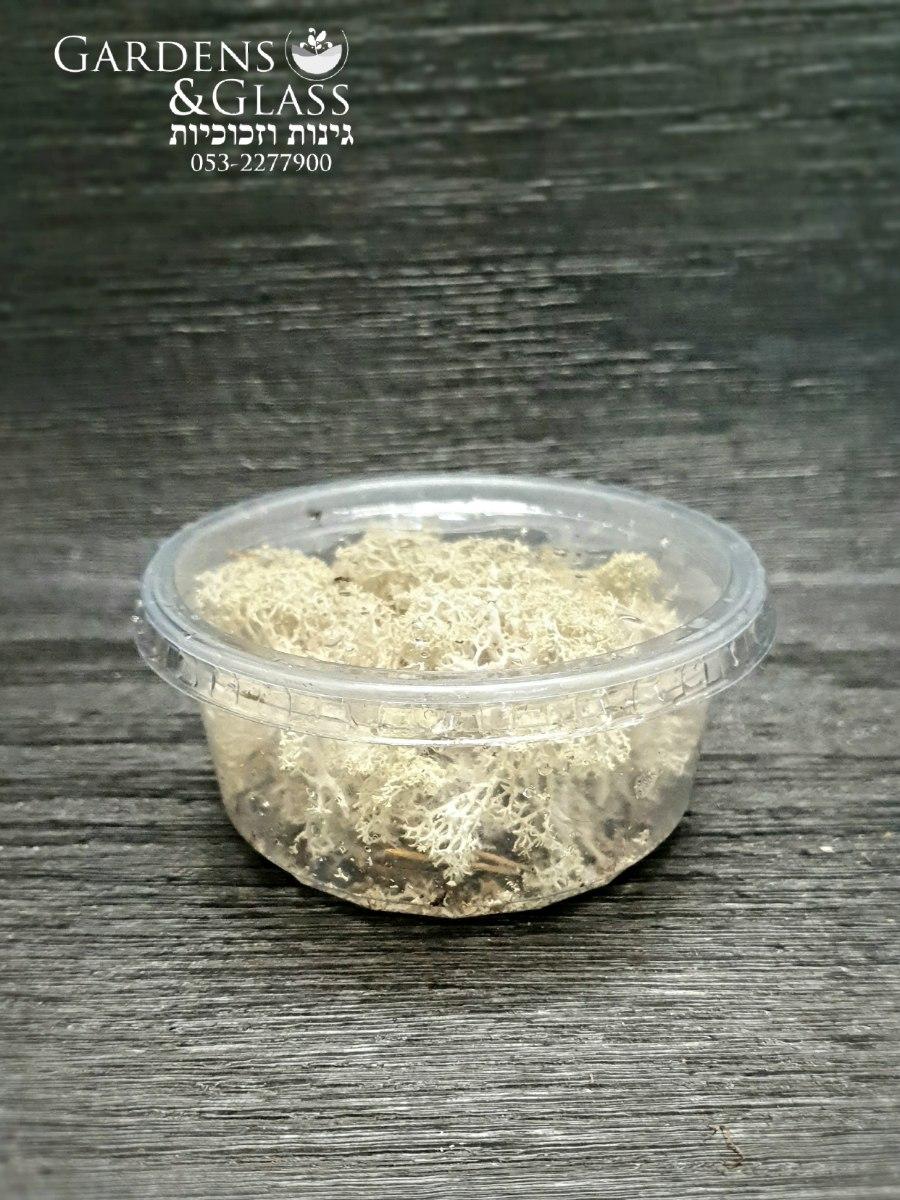דיר מוס טבעי כופסית 2
