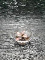 פיטוניה גידי הכסף וורוד כוס 1