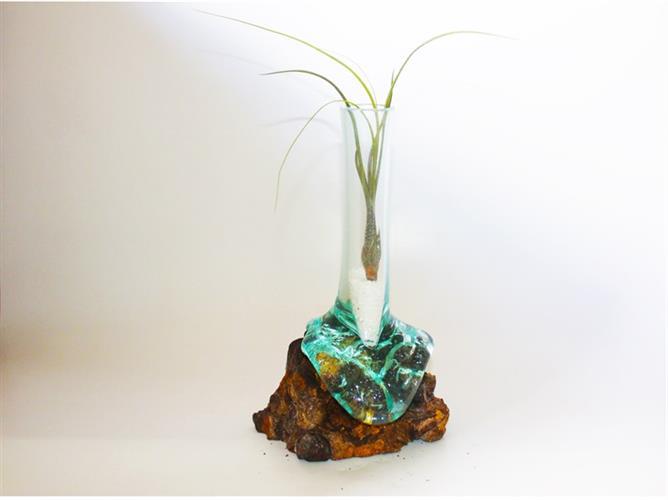 """טרריום צר גובה 25 ס""""מ על גזע עץ עם צמח אוויר"""